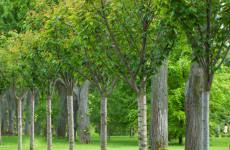 Tree & Shrub 5-10-10